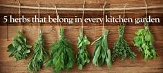 Regardless of the size of your home, there's always room for a pot on the windowsill or a small container. #herbs #garden
