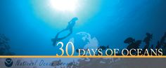 Join us as we celebrate 30 days of oceans (May 8-June 8) leading up to World #Ocean Day!