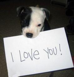 baby dog love