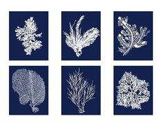 Six 8x10s for $60. Archival Quality Coral Prints White on Navy Blue Sea Coral by BeachHouseGallery, $59.99