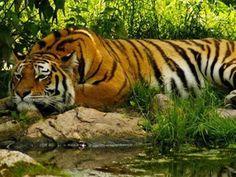 Tipeshwar Wildlife Sanctuary - in Maharashtra, India