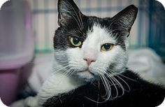 Martha is a quiet and sweet cat up for adoption at the Humane Society of New York.