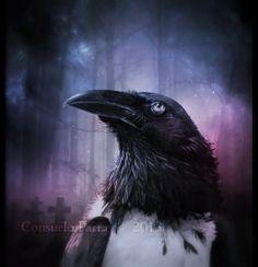History of Raven by =Aeternum-Art on deviantART