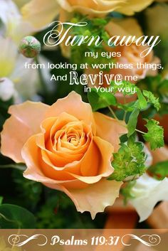 """Psalm 119:37 (KJV) -""""Turn away mine eyes from beholding vanity; and quicken thou me in thy way."""""""