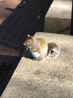 Another fat squirrel.