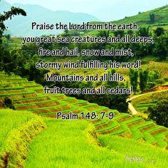 Psalm 148: 7-9