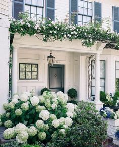 traditional white exterior with arbor, white climbing roses, and hydrangea, black shutters