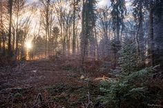 Golden sunrays through the winter fog Winter Wonderland, Country Roads, Plants, Plant, Planets