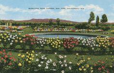 Wedding Venue Idea: Postcard of the Municipal Rose Garden, San Jose, California - California Art, Northern California, Local History, Ancient History, Santa Clara County, San Francisco Bay, Vintage Santas, Where The Heart Is, San Jose
