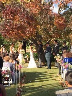 Autumn wedding under the old Ash Tree at Mulberry Lodge , Willinga, Fleurieu Peninsula, South Australia