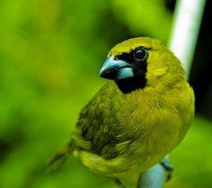 green animal | Emerald Kitty: 10 Amazing Green Animals