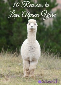 10 Reasons to Love Alpaca Yarn - Discover why this natural fiber is well loved for knit and crochet projects