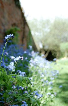 (by Joanne Downing) Little Flowers, Blue Flowers, Wild Flowers, Steep Gardens, Cranesbill Geranium, Flannel Flower, Farm Lifestyle, Country Blue, Country Living