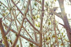 by [se]: using Rebecca Lily's Moderne Retro preset