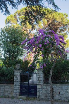Sidewalk, Plants, Travel, Walkways, Viajes, Plant, Traveling, Pavement, Tourism