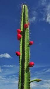 Resultado de imagem para bioma da caatinga