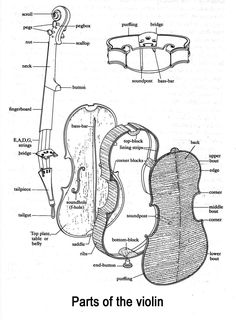 Look at the parts of the violin. Can you find the scroll?