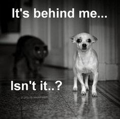 It's behind me...isn't it?