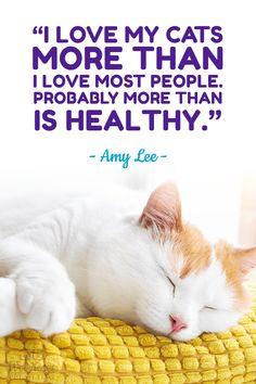 Click for more dog quotes! #quote #dog #cat  Wet Noses Pet Sitting Fort Collins, Loveland, Greeley, Windsor Pet Sitter, Dog Walker, Cat Sitter Be Inspired Quotes, Cat Sitter, Pet Sitting, Cat Quotes, Fort Collins, Cat Life, Make You Smile, Windsor, Funny Dogs