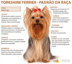 Proper grooming for a Yorkie keeps their coat healthy and beautiful. Learn why your Yorkie might shed and the 4 proven keys to successful grooming. Perro Fox Terrier, Welsh Terrier, Airedale Terrier, Border Terrier, White Terrier, Scottish Terrier, Bull Terriers, Pitbull Terrier, Tatuaje Bull Terrier
