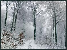winter forest by Ingelore.deviantart.com on @DeviantArt