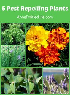 5 Pest Repelling Plants