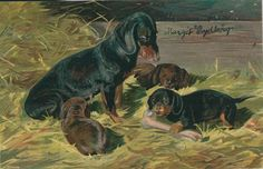Antique Postcard. Dachshund.  UvU