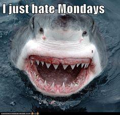 Me on Monday
