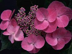 Küçük Çiçek Tomurcukları