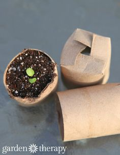 Toilet roll seed starters - and easy DIY and part of the best and worst seed starting containers to make