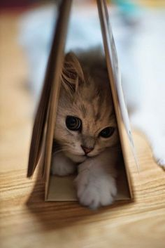 Cute Little Baby Kitten playing 'Hide & Seek' - Aww!