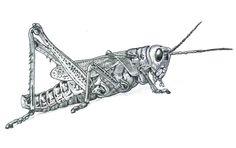Arthropoda(6): Grasshopper by lluic