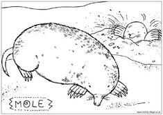 Mole colouring page