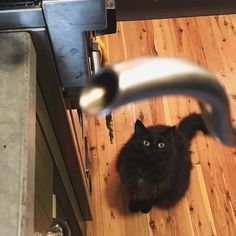 This morning's #pourover #coffee supervisor. #cat #catsandcoffee http://ift.tt/20b7rle