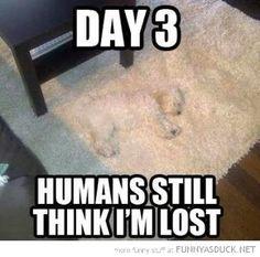 lost dog on carpet