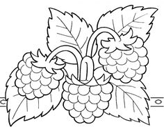 Fruit Coloring Pages, Colouring Pages, Coloring Sheets, Coloring Books, Fruit Painting, Fabric Painting, Outline Drawings, Easy Drawings, Arte Do Galo