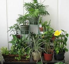 How To Grow Gorgeous Gardens Indoors With Ease http://gartenlandschaftsbau.blogspot.co.at/2013/03/how-to-grow-gorgeous-gardens-indoors.html