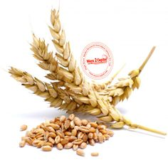 Barley prices closed lower by 1.03 per cent on Friday at the National Commodity & Derivatives Exchange Limited (NCDEX)