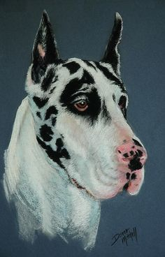 """Pastel Painting of """"Sir Lancelot, a Great Dane"""". I met him at the Harrisburg Dog Show!"""