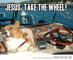 funny-corgi-boat-jesus-take-wheel.jpg (540×447)