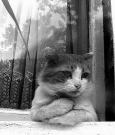 Very interesting post: TOP 29 Sad Сat Pictures.сom lot of interesting things on Funny Animals, Funny Cat. Cute Funny Animals, Funny Cats, Simons Cat, Mama Cat, Sleepy Cat, Funny Cat Pictures, Wild Life, Beautiful Cats, Cat Life