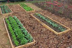 6 Spring Crops That Rock - Garden Season Starts Now!