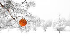 Скачать обои снег, природа, зима, рождество, шарик, елка, новый год, украшение, лес, раздел праздники в разрешении 1366x768