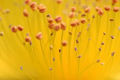 Flowers. Pinned by @Marly | Namely Marly. #flowers #photography