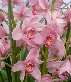 Orchids to Belinda