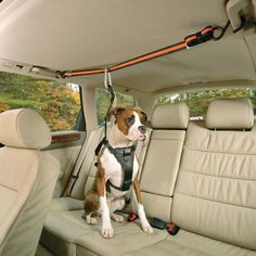 Tru-Smart Harness and Auto Zip Line- dog can move and be safe! Plus it would help when Bailey tries to climb into the front seat :]