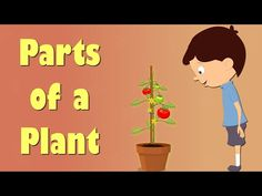 Informative Video, from a website that will talk about the parts of a plant  in a engaging or interesting video for children. (Simply Kinder).