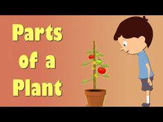 Vídeos y fichas para conocer las partes de las plantas @pelesa2 //Videos and printables to learn about plants and flowers