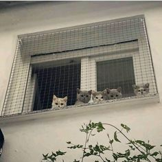 shelter construction for street animals - Katzenrassen Beautiful Cats Cat Aesthetic, White Aesthetic, Korean Aesthetic, Baby Animals, Cute Animals, Photo Chat, Photocollage, Cute Creatures, Beautiful Creatures
