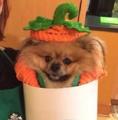 The Real PSL Returns for an Exclusive Interview   Starbucks Newsroom -  - Pumpkin Spice Latte